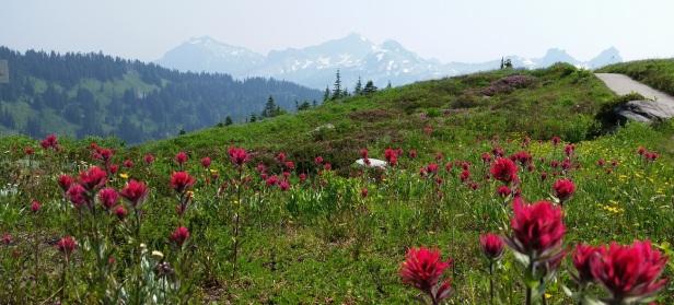 Mount Rainier National Park Wildflowers
