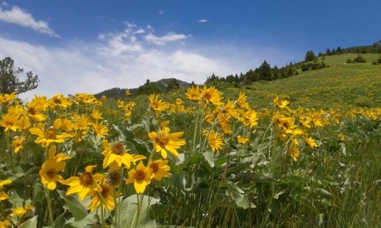 Bozeman Montana M trail
