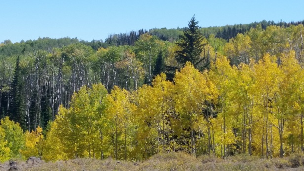 Scenic Hwy 12 - Aspens on Boulder Mountain